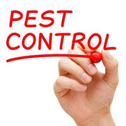 Organic Pest Control Perth's photo
