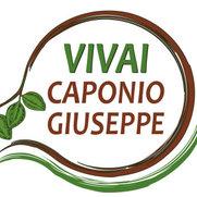 Foto di Vivai Caponio Giuseppe soc. agr. S.r.l.
