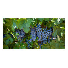 """Alexander Valley Grapes, Canvas Giclee, 48""""x24"""""""