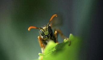 Best Pest & Termite Control Inc