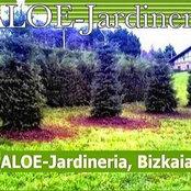 Foto de Aloe Jardinería