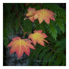 "Fall Colors, Mckenzie Pass, 40""x40"""", Fine Art Print"