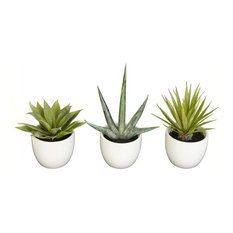 Southwest Agave Collection, Set of 3