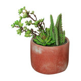 Artificial Potted Cacti and Succulent Plants