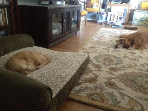 Warning Costco Dog Bed