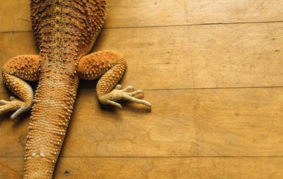 Pet's Place: Goober the Lizard Conquers the Stairs