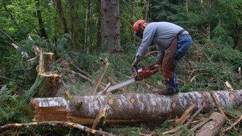 Tree Lopping