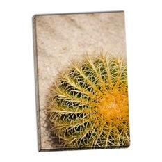 Fine Art Photograph, Cactus, Hand-Stretched Canvas