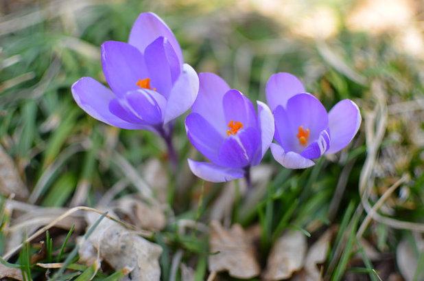 Gemeinsame Farbe des Monats April: Frühlingsfrisches Krokus-Lila &UN_38