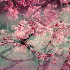 - Blossom 09 - Fotokunst