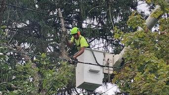 South Jersey Tree Service