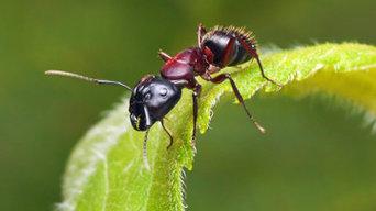 Marks Pest Control Canberra