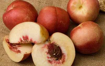 Grow Plum Hybrids for Your Favorite Fruit Flavors