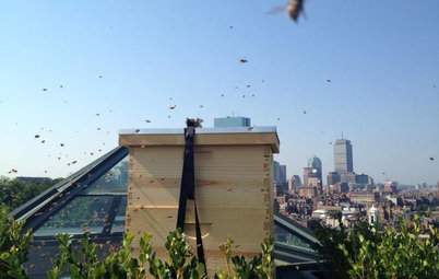 Hello, Honey: Beekeeping Anywhere for Fun, Food and Good Deeds