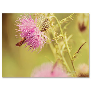 Skipper On Pink Thistle Canvas Art By Lois Bryan Traditional Prints And Posters By Trademark Global