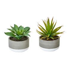 """Succulent In Ceramic Pot, 2-Piece Set, 6"""""""