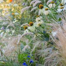 Naturalistic Planting schemes