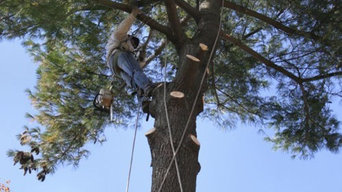 Tree Surgeon Tamworth