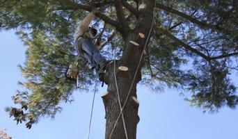 Tree Surgeon Tamworth