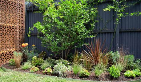 Before & After: A Small Garden Gets a Clever, Easy-Care Makeover