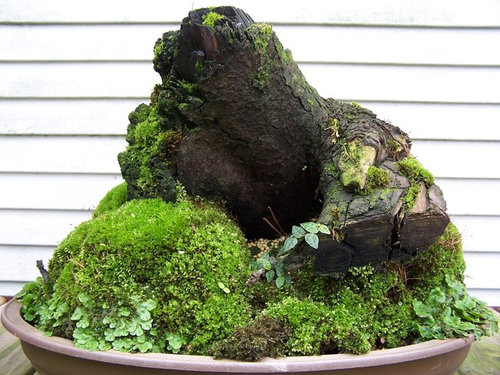 Moss Garden With Pumice And Stump