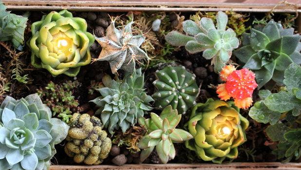 Fai da te mini giardino di piante grasse