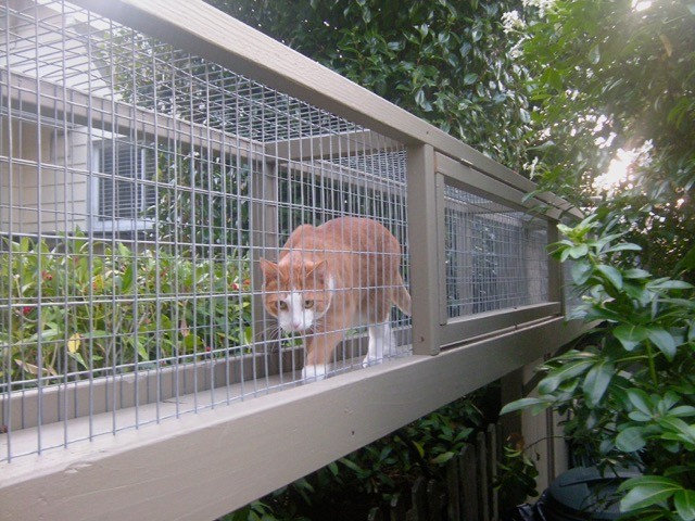 How to Get a Catio Built
