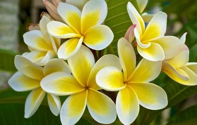 Top 10 Flowering Plants for Subtropical Gardens