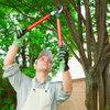 Les bons gestes à adopter pour tailler les arbres