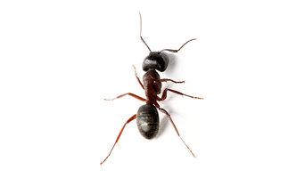 VIP Pest Management - Pest Control Bendigo