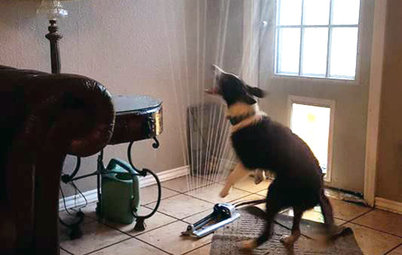 Happy Puppy Drags Sprinkler Through Doggy Door, and Chaos Ensues