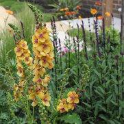 Robert Kennett ~ Garden Designer's photo