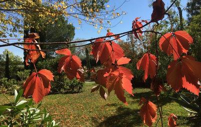 12 árboles y plantas para disfrutar de un otoño a todo color