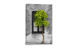 """Tree in Front of Window Green Pop Color Pop"" by Panoramic Images, 26x18x0.75"""