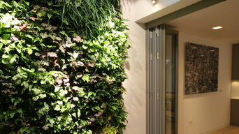 Basement living wall
