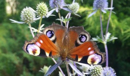 Живой сад: С бабочками, пчелами и жуками — что надо посадить