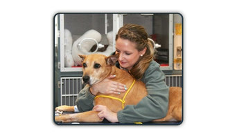 Vets for Pets – Common Diseases in Dogs