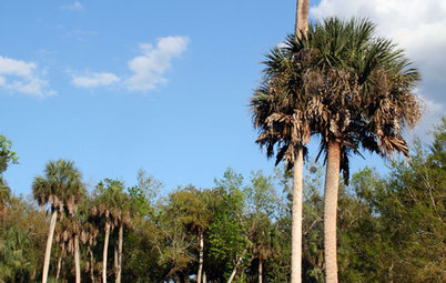 Great Design Plant: Sabal Palm Enchants in Balmy Sites