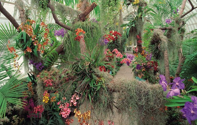 See the Amazing Orchids Unfolding at a New York Garden Show