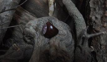 Kormakar