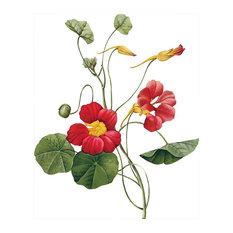 """Redouté """"Nasturtium"""" Botanical Print"""