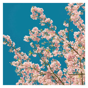 Cherry Blossom Non-Woven Wallpaper Mural
