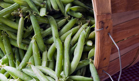 Cool-Season Vegetables: How to Grow Peas