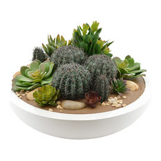 Variety Of Succulents In White Bowl