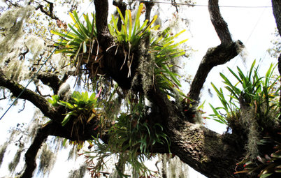 Got a Hot, Humid Landscape? Add Tropical Flair With Air Plants