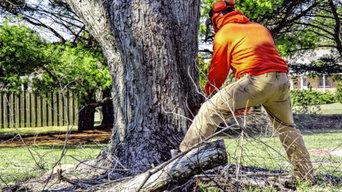 Tree Removal Service Birmingham