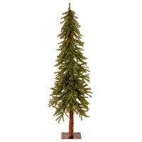 5' Hickory Cedar Tree