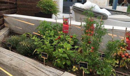 Pregunta al experto: Qué hacer para tener un huerto en el jardín