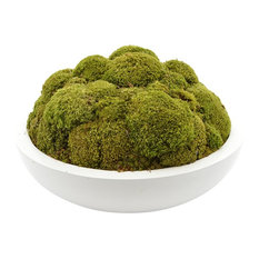 Natural Moss Round White Container