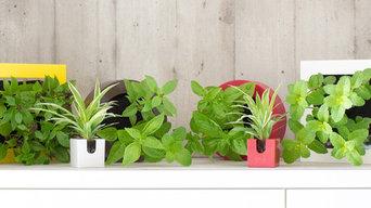 Midorie Plants